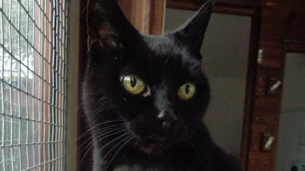 Owner plea for missing Liverpool cat found 130 miles from home