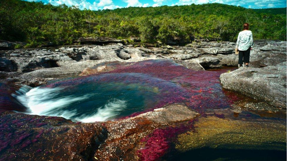 Fotografía del río Caño Cristales.