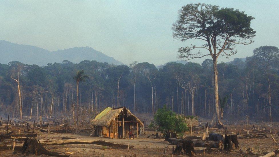 Una imagen que muestra la deforestación de la selva amazónica