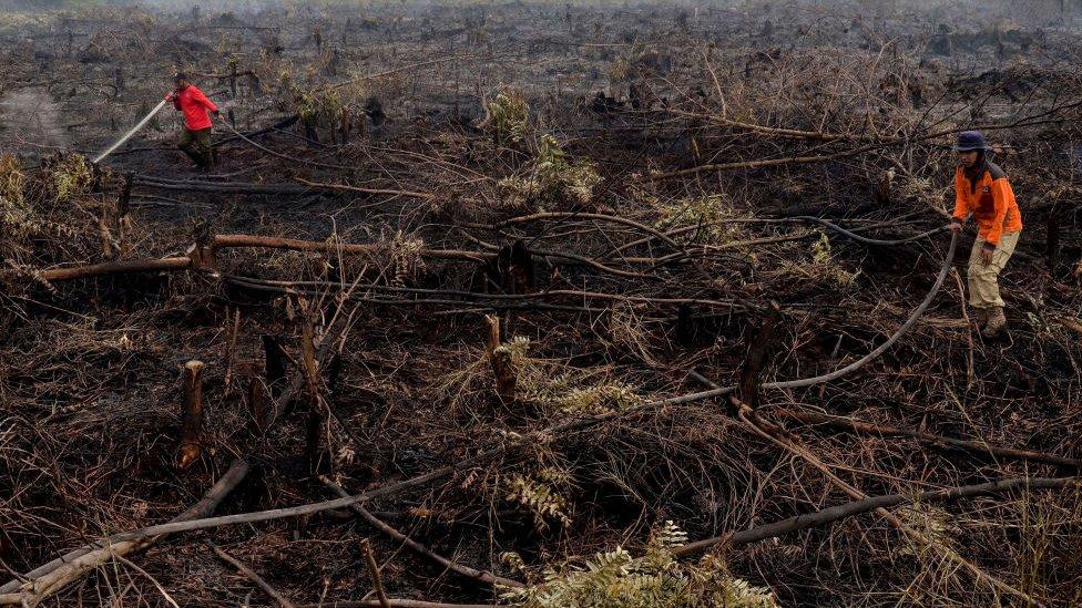 Tierra deforestada