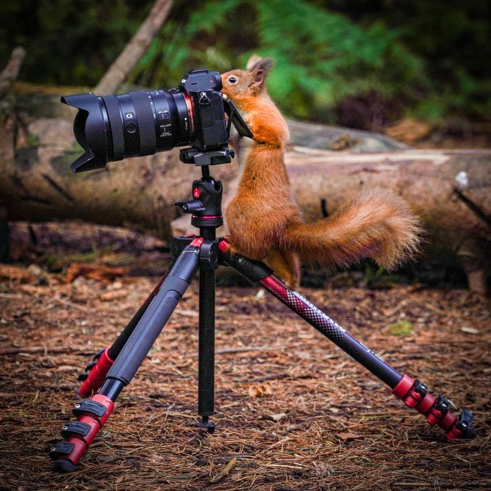 Squirrel on camera