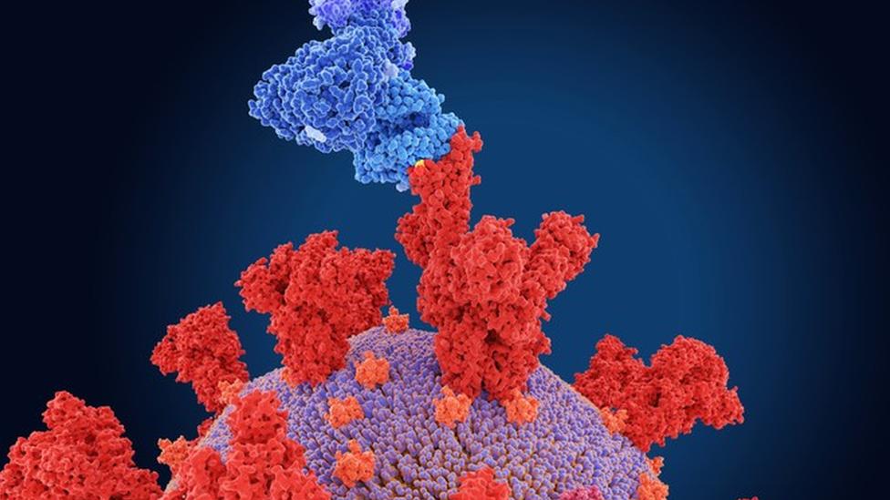 Ilustração de um coronavírus invadindo uma célula humana