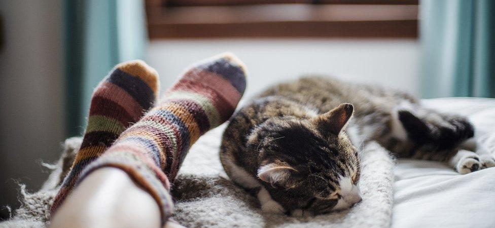 Mačka spava na krevetu