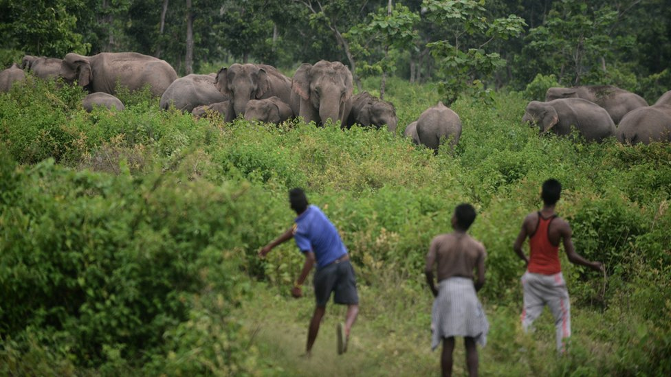 Setelah dikejar dan diusir, gajah dewasa dan bayi gajah semakin stres.