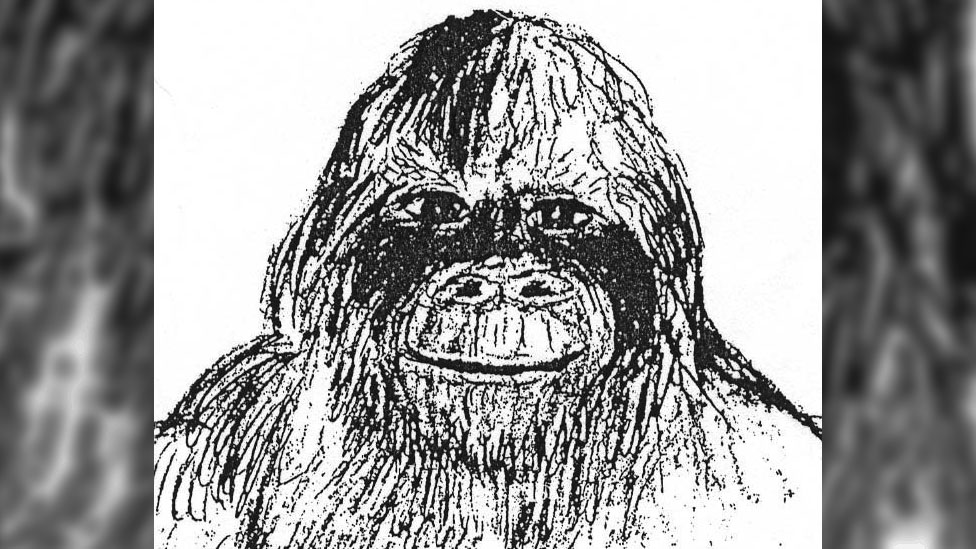 An alleged eyewitness drawing of a Bigfoot seen in the US
