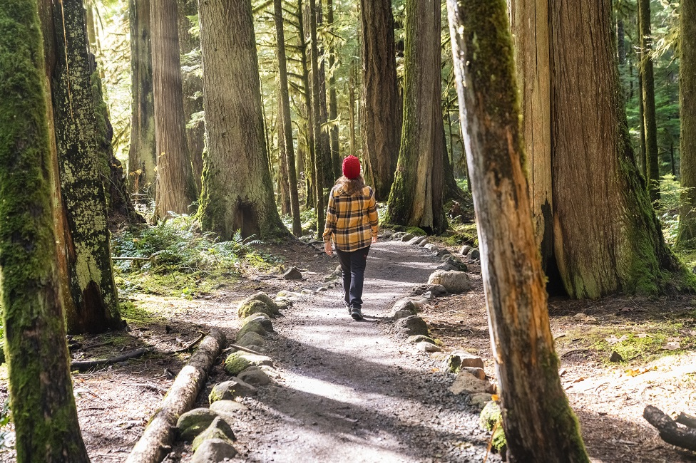 A woman walks through a sunny forest