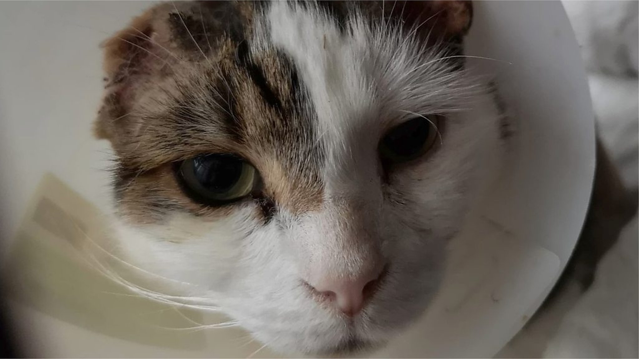 'Amazing' support for cat who lost ears in knife attack