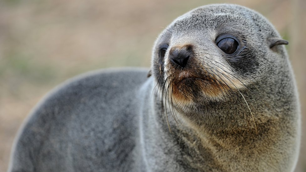 Six baby seals found decapitated in New Zealand bay