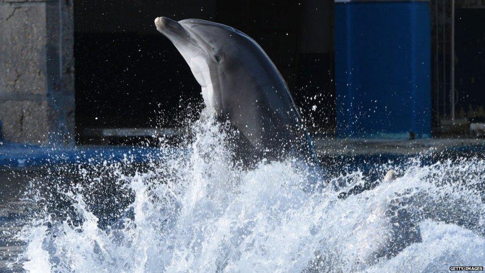 Delfin tokom predstave u delfinarijumu u Španiji