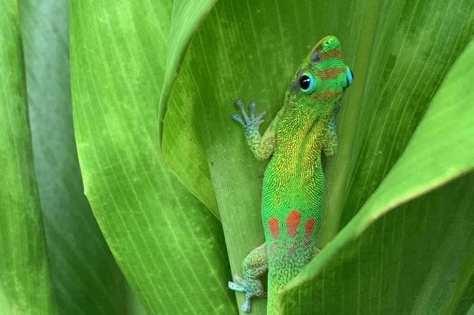Gecko on a plant