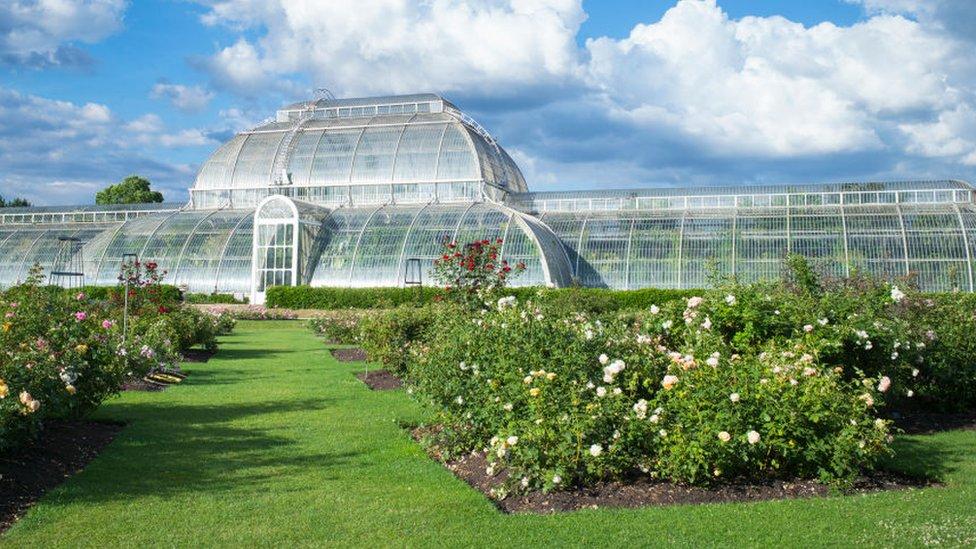 邱園中著名的地標建築物,維多利亞時代建造的玻璃暖房——溫帶植物溫室(Temperate House),裏面容納了1萬株植物。