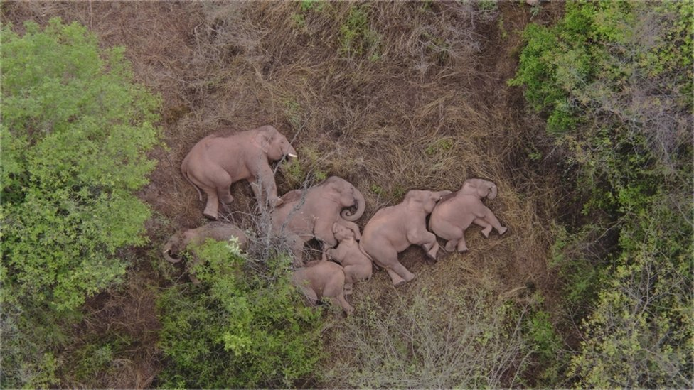 Fotografía de los elefantes durmiendo.