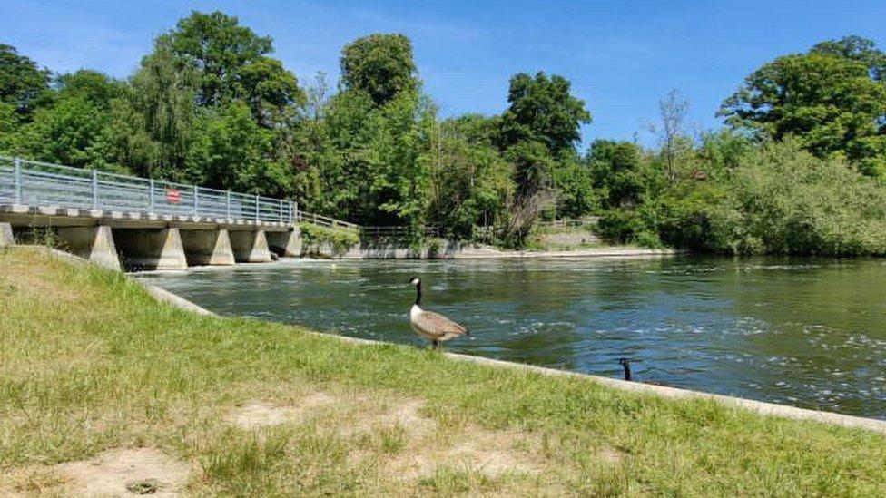 Odney Weir