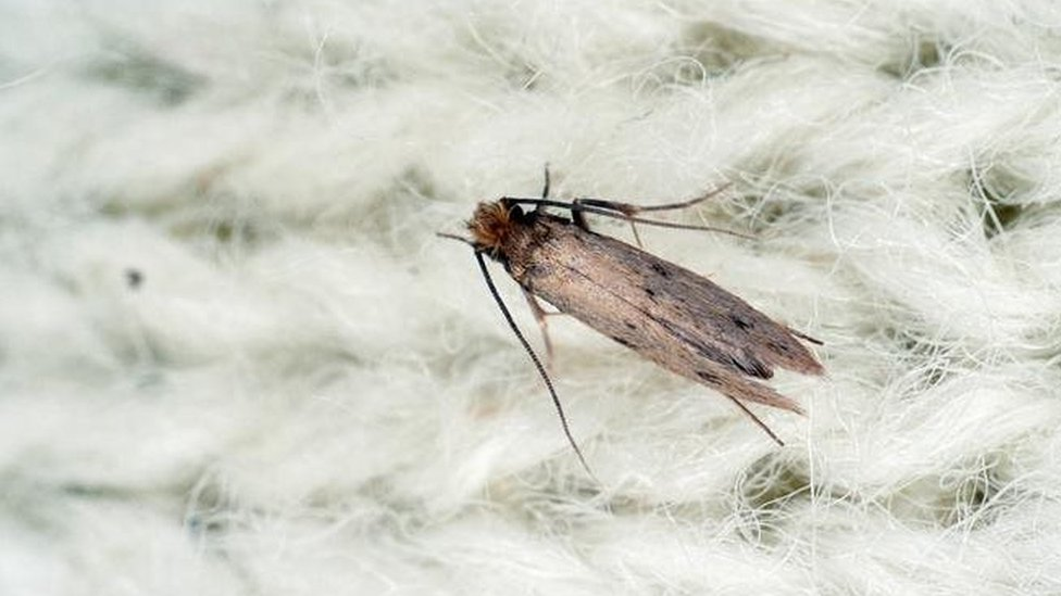 Reality Check: Are clothes moths on the rise?