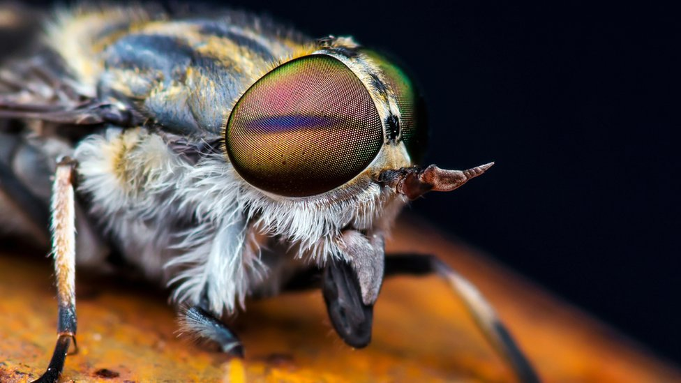 Heatwave causes spike in insect bite calls to NHS