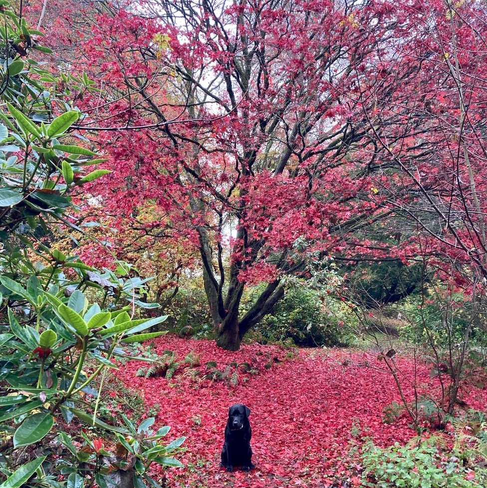 This is Winston moments before he dived into the leaves during a walk in Blair Drummond, from Tim Weir of Glasgow.