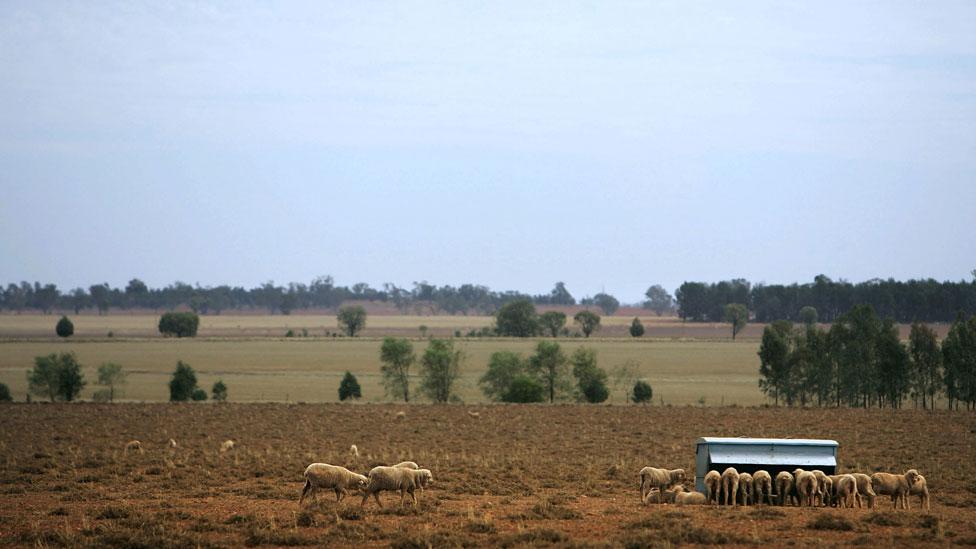 Granja de ovejas en Nueva Gales del Sur