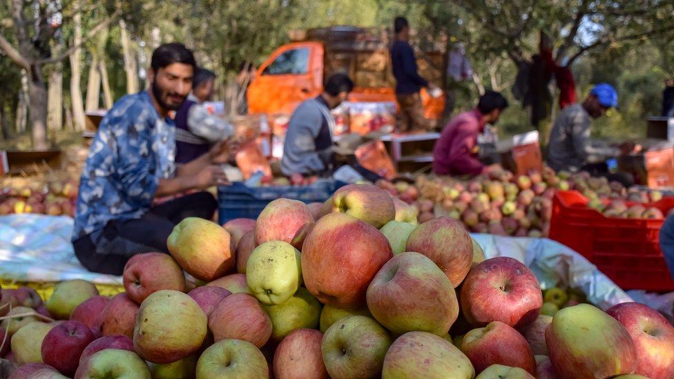 Recolectores de manzanas en el campo