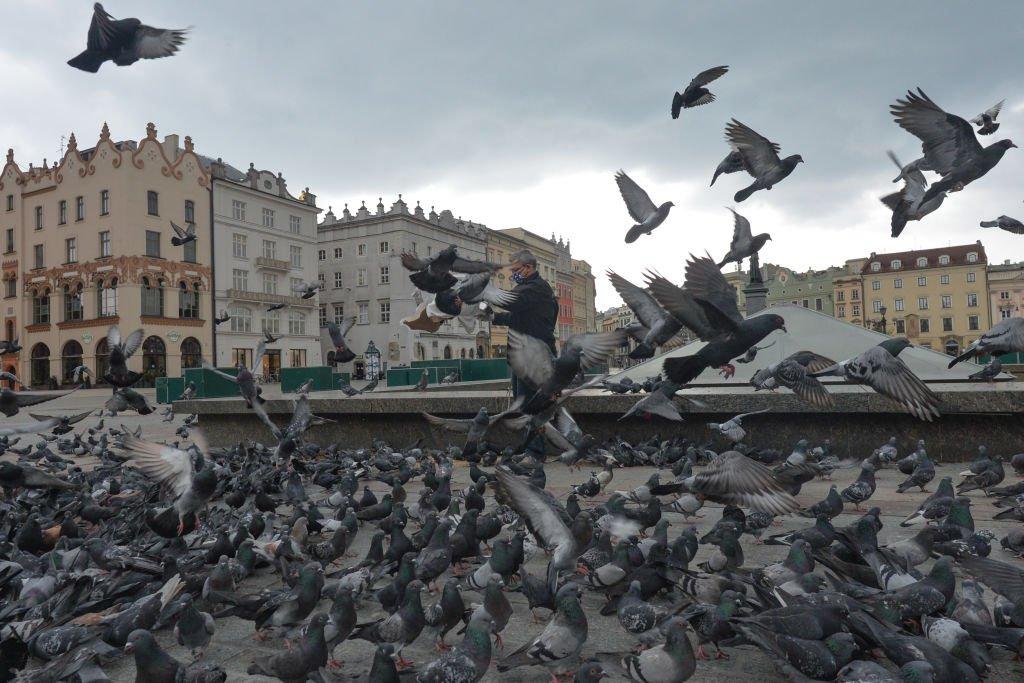 Pigeons in Krakow