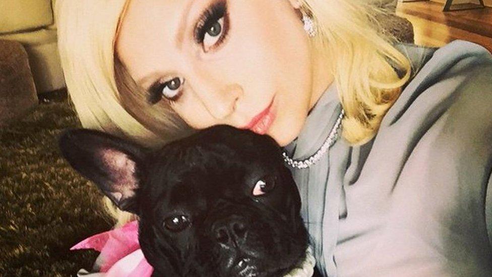 ليدي غاغا وكلبتها ميس آسيا