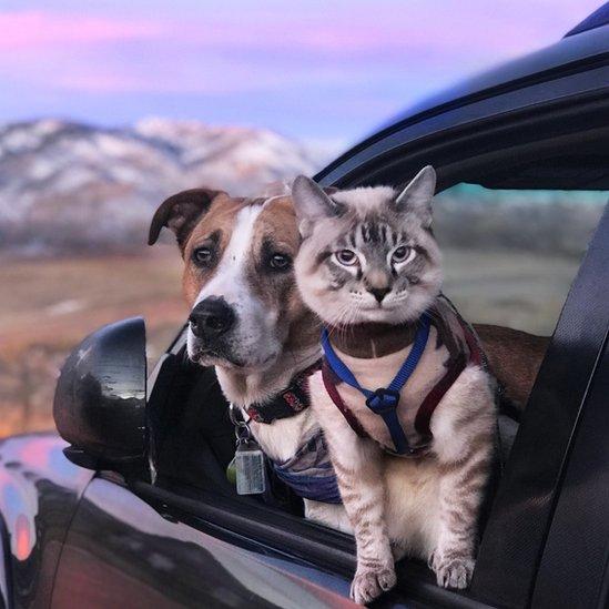 El perro y el gato mirando por la ventana de un auto.