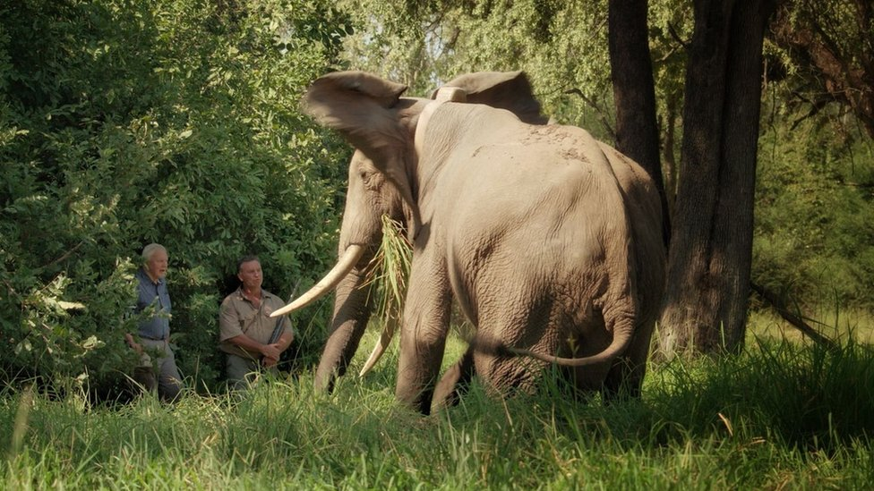Nick Murray and Sir David Attenborough face to face with an elephant