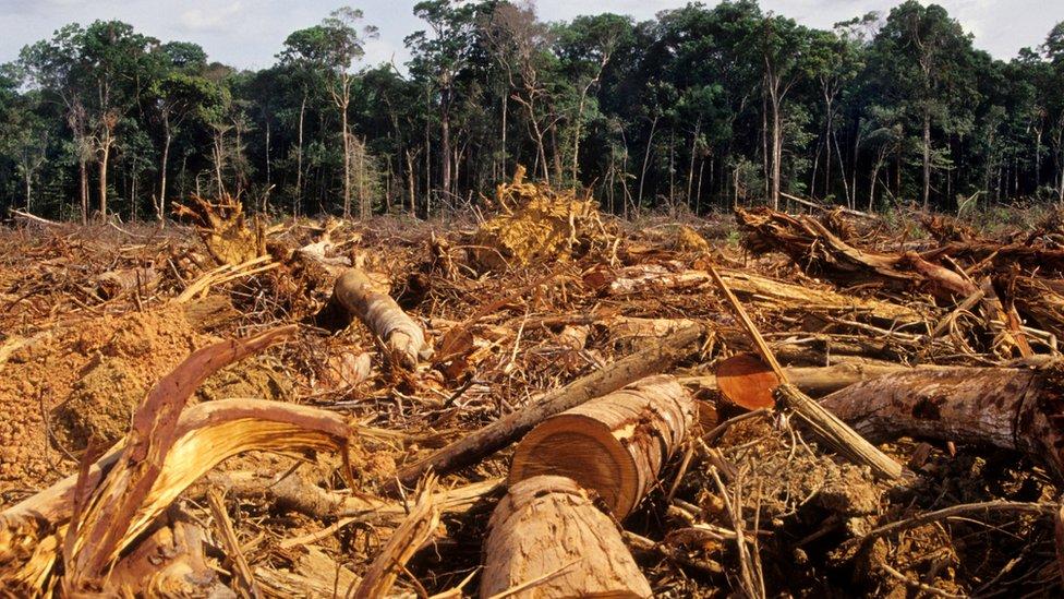 deforestación