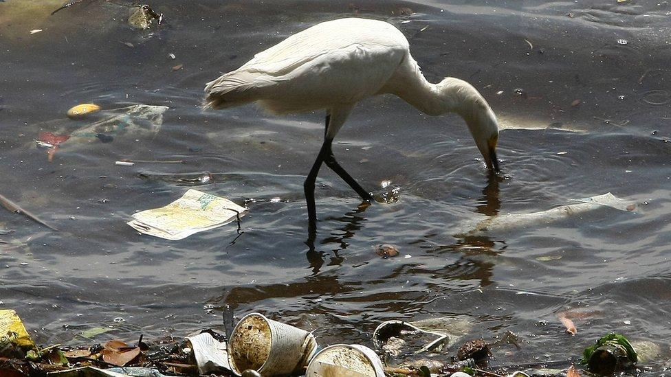 Harekete geçilmezse, okyanuslardaki plastik atık miktarının 10 yıl içinde üçe katlanması bekleniyor.