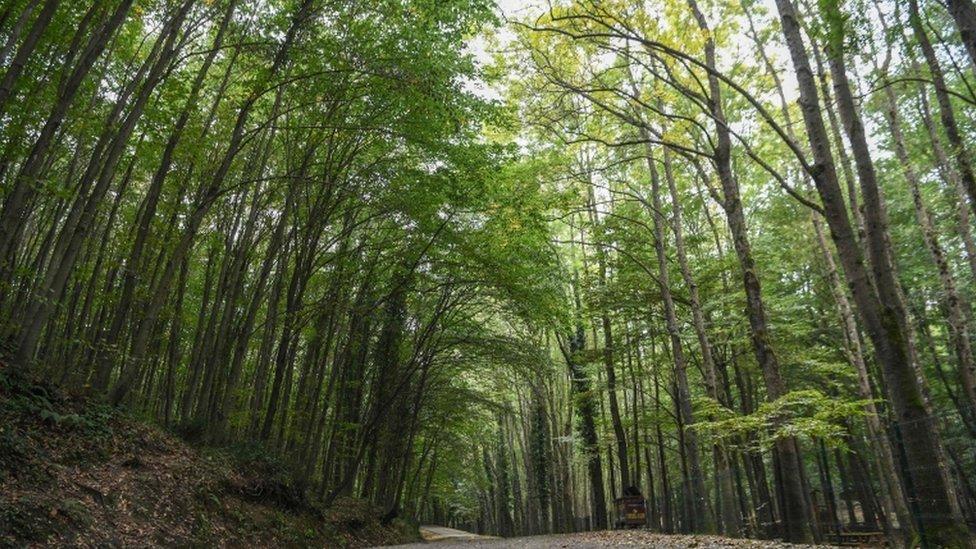 Beogradska šuma