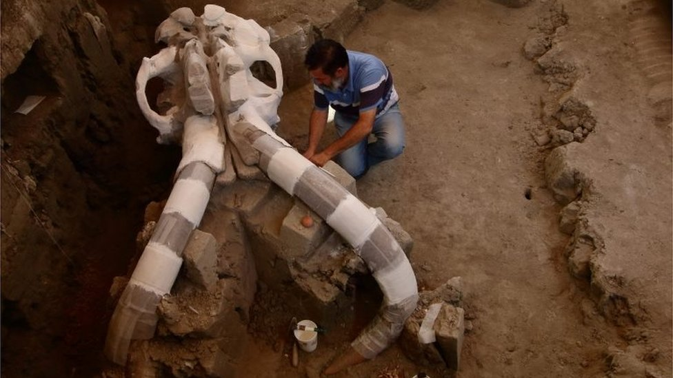 Mexican archaeologist Luis Cordoba works on parts of a skeleton of a mammoth discovered in December 2015 in Tultepec, Mexico
