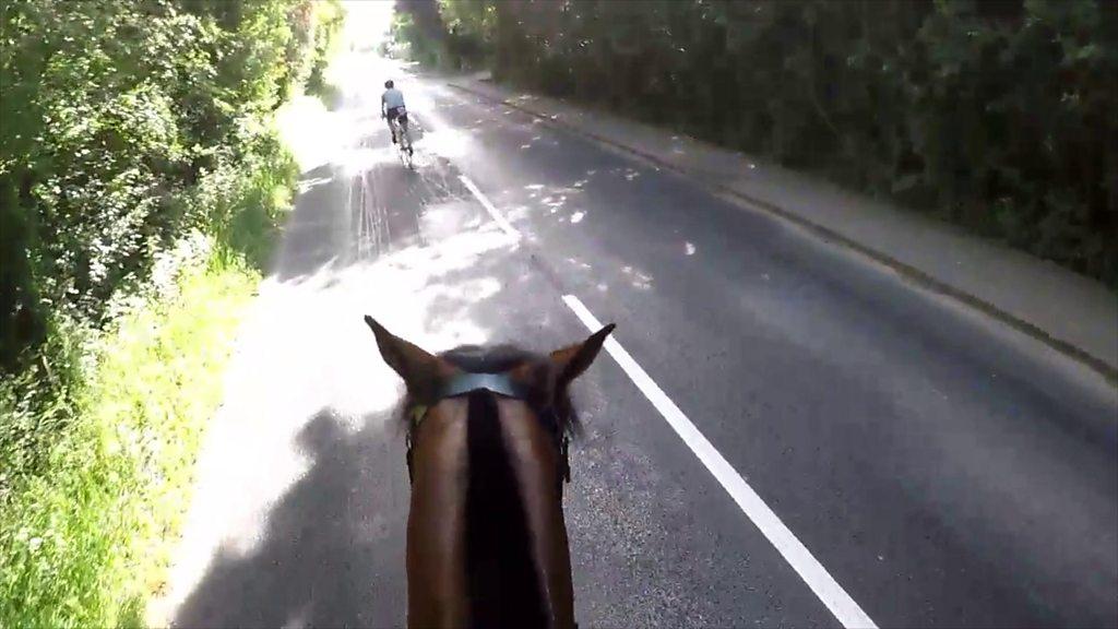 'Horse hit' as Windsor Triathlon cyclists pass