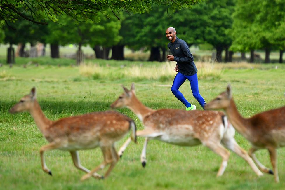 السير محمد فرح يتمرن في حديقة ريتشموند في لندن على مقربة من عدد من الغزلان