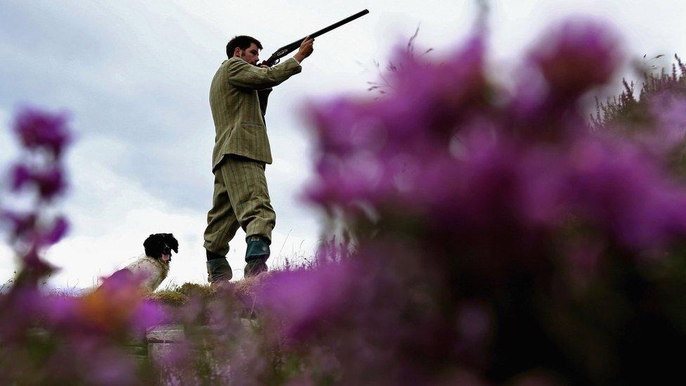 Extreme weather hits Scotland's grouse shooting season