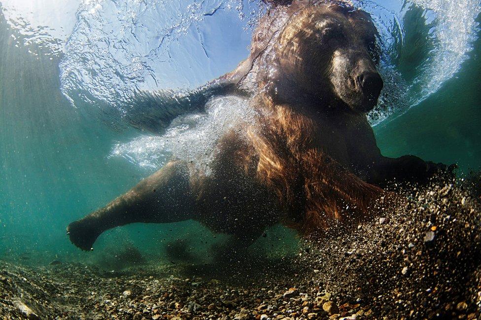 Mike Korostelev underwater image
