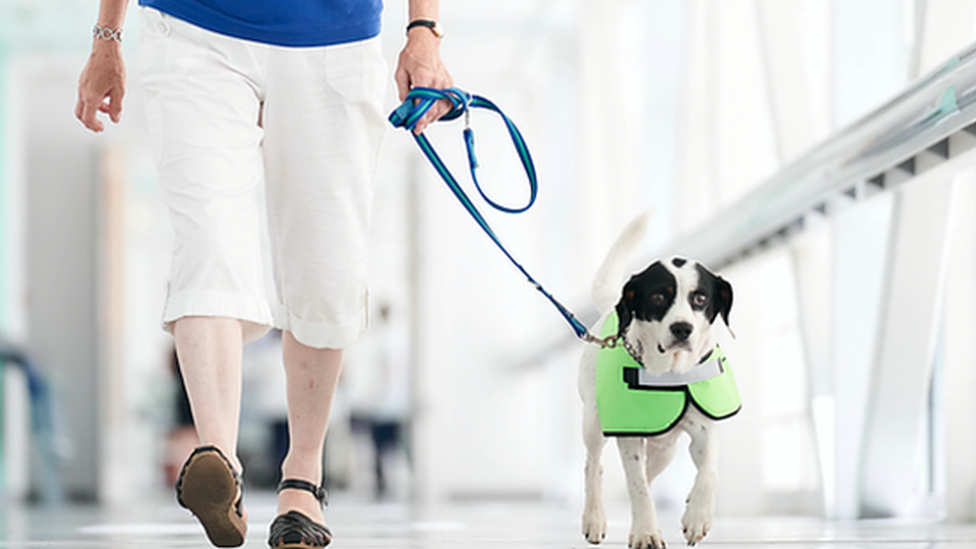 Hospital recruits eight dogs to brighten up patients' stay