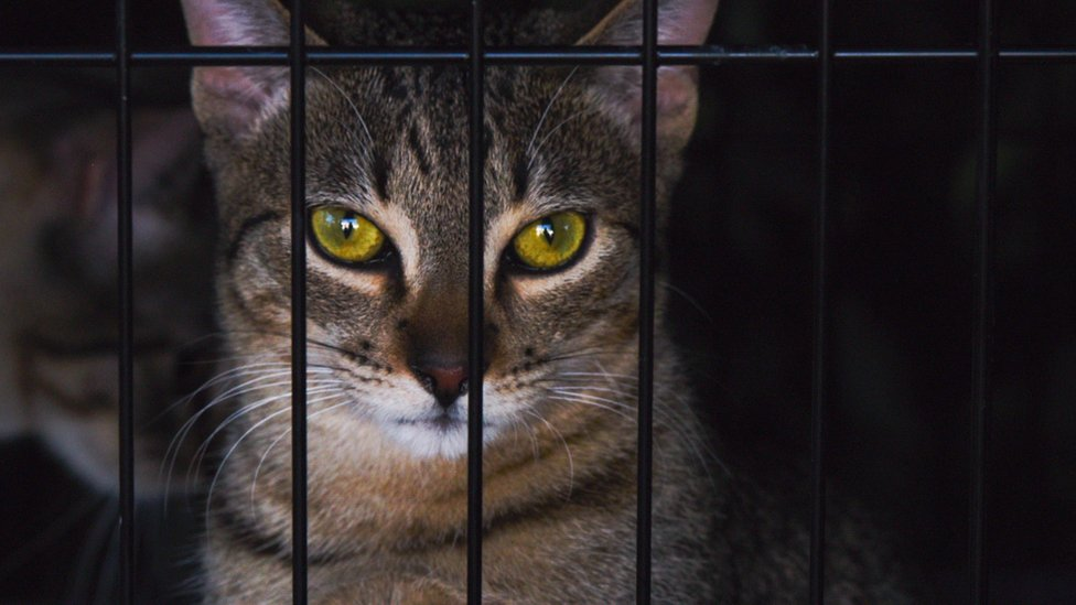 Rescue cat at a shelter adoption event in Beverley Hills