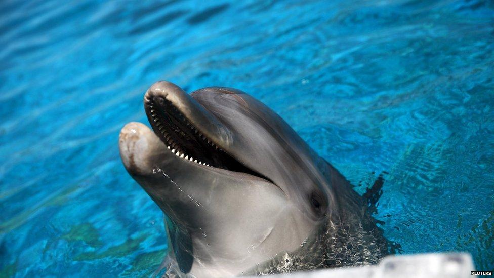 A dolphin is pictured during a hot summer day at a zoo in Spata near Athens, Greece (16 July 2015)