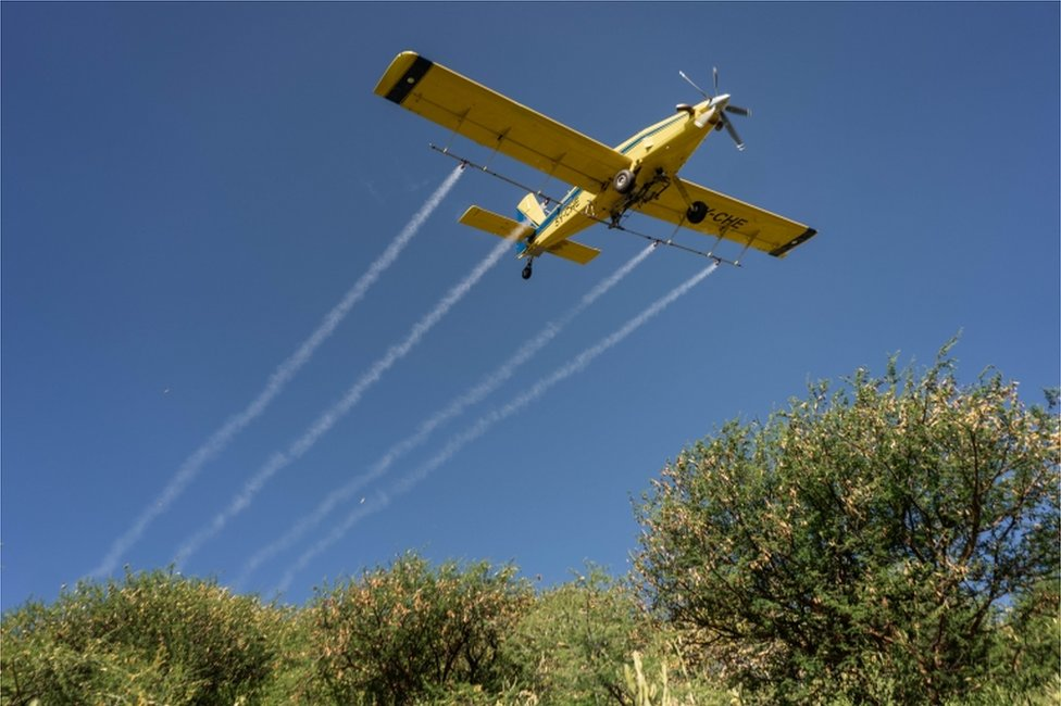 A low-flying light aircraft sprays vegetation below it.