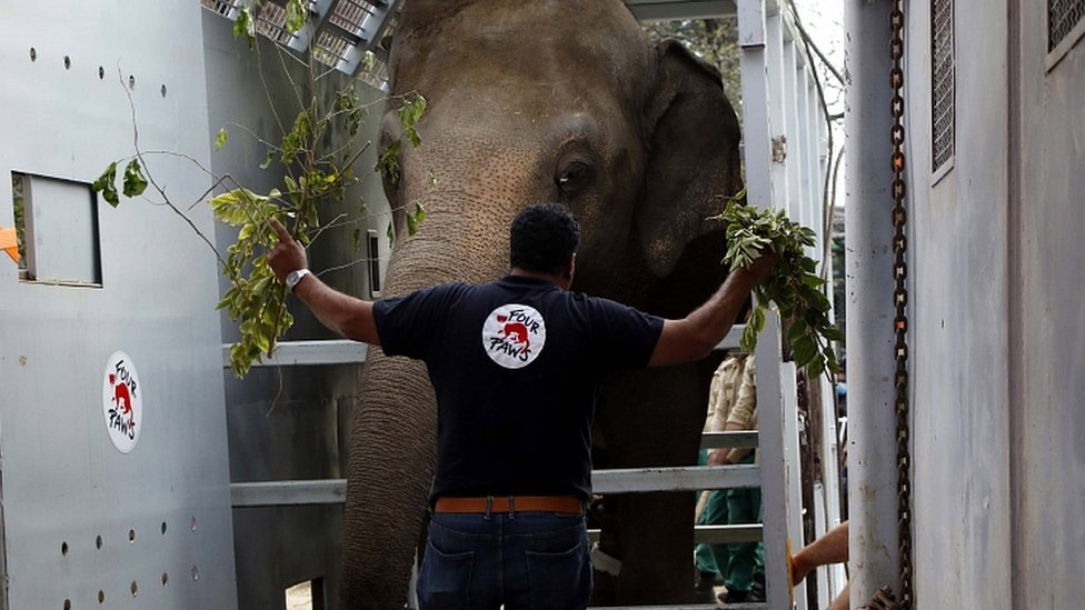 Amir Khalil, veterinarian and mission leader of Four Paws International, stands beside Kaavan as he is being transported to Cambodia, in Islamabad, Pakistan, 29 November 2020