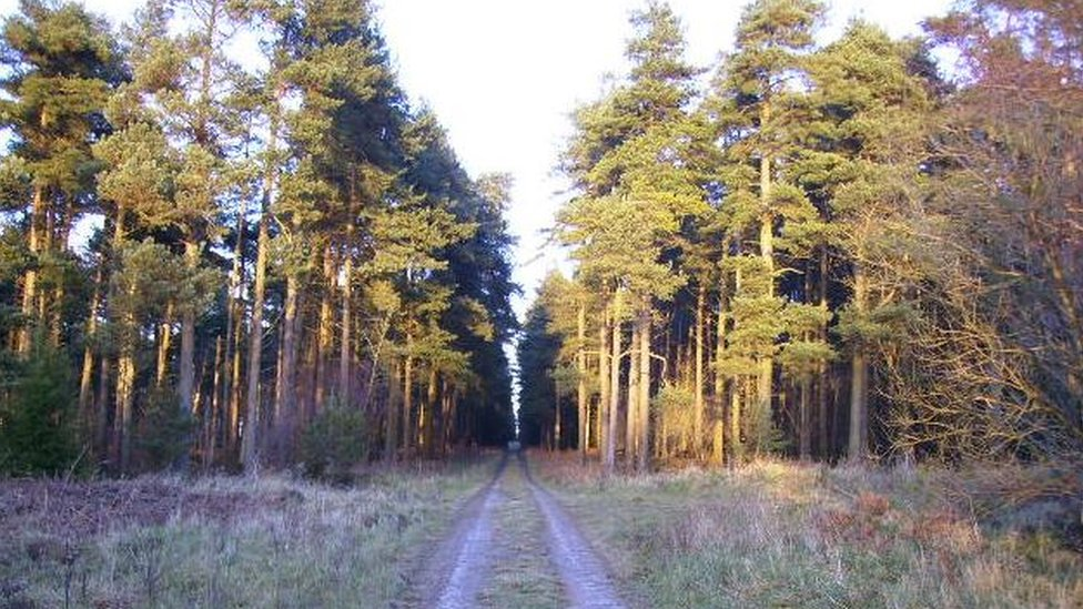 Relocated Dalby Forest sculpture plan approved