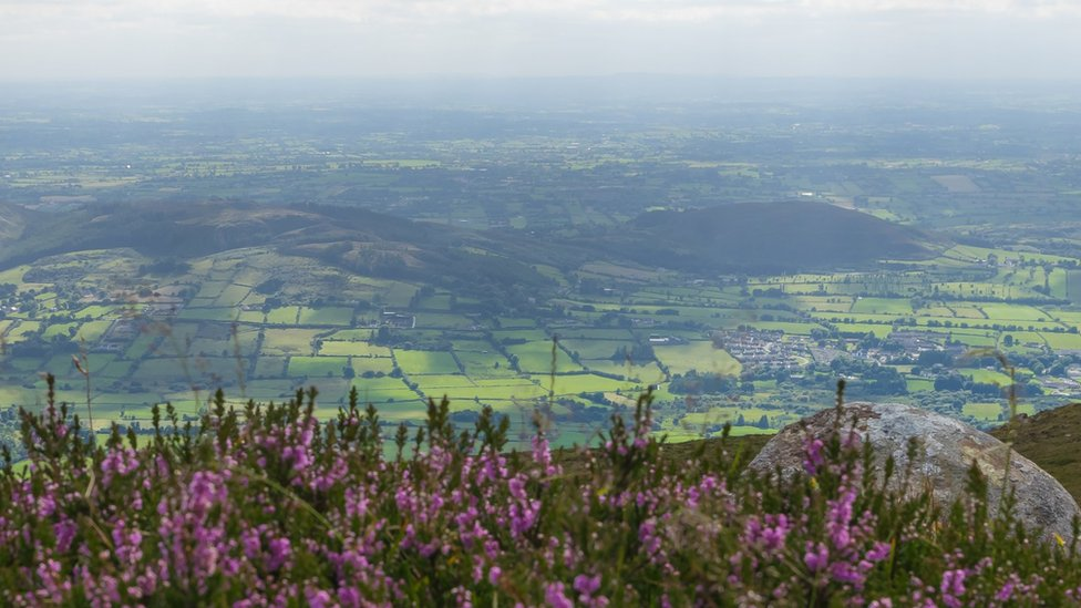 View from the top of Slieve Gullion (County Armagh), looking across heather in bloom and below an Irish rural landscape, stretching from County Armagh (Northern Ireland, UK) across to County Louth (Republic of Ireland).