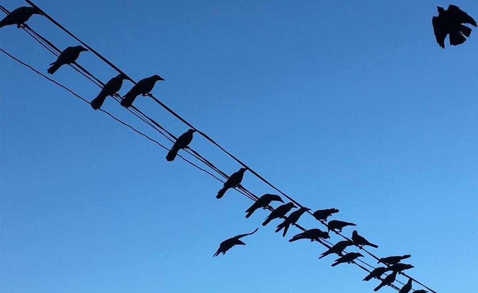 Pájaros en un cable de electricidad.