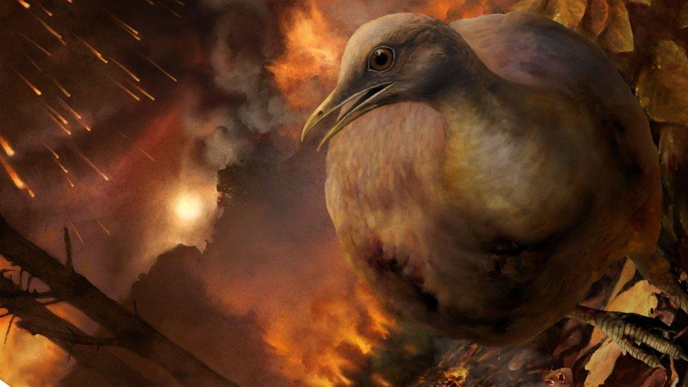 How ancestors of living birds survived asteroid strike