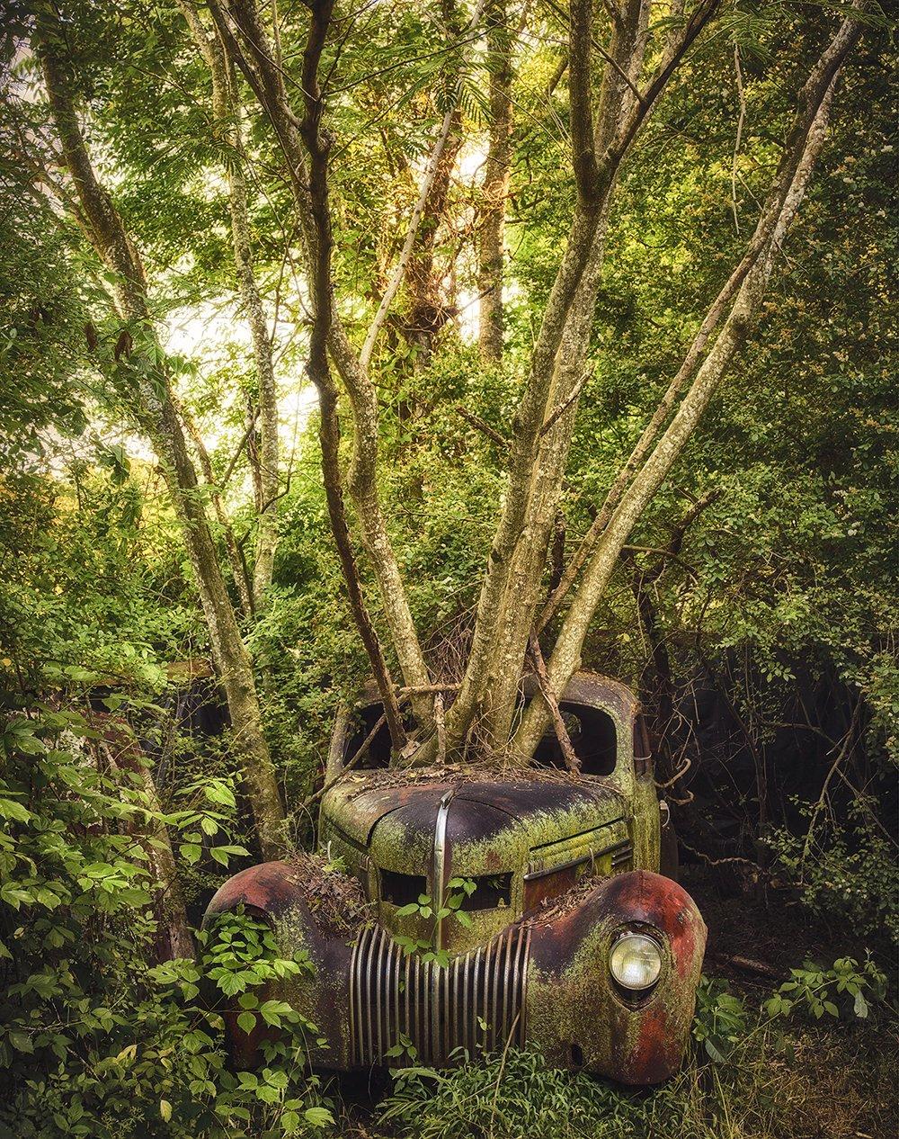 Mobil yang ditelantarkan, batang pohon menjulur melalui kaca depan
