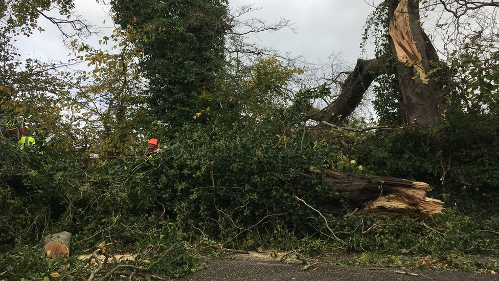 A fallen tree on the Upper Croft road in Holywood, County Down
