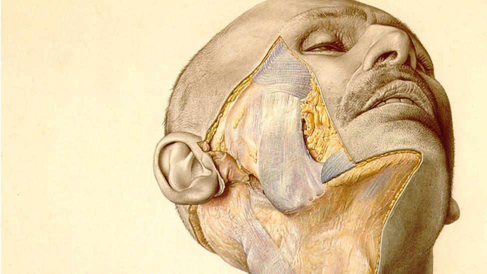 Ilustracija iz atlasa pokazuje čovekov delimično seciran obraz
