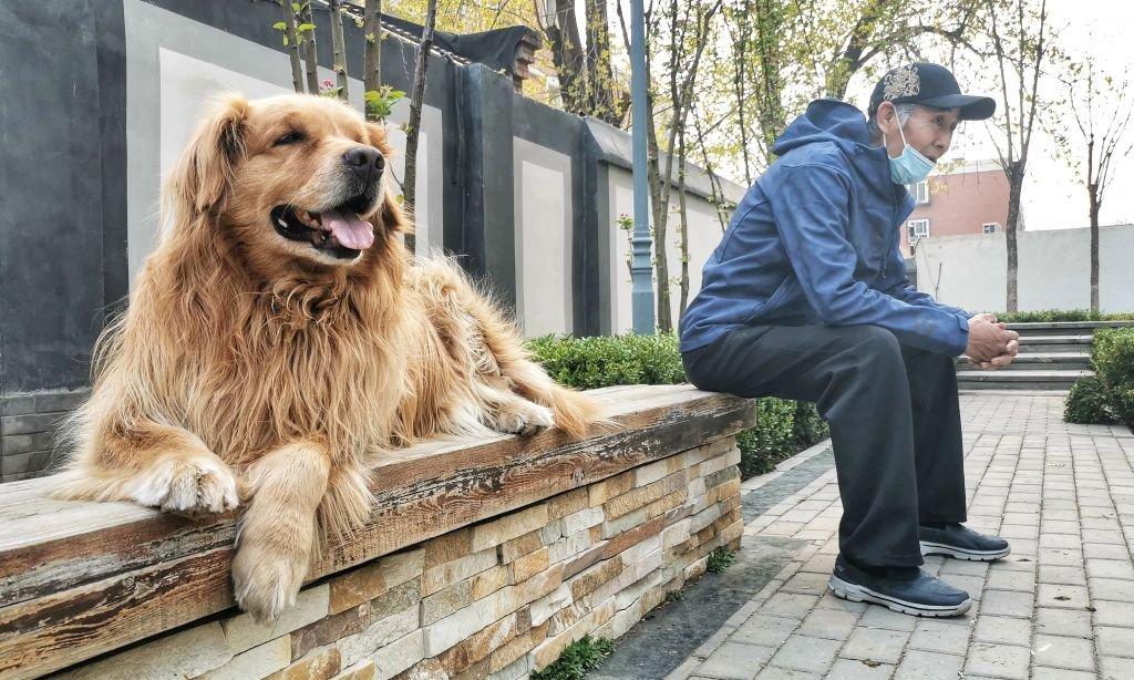 """中國農業部計劃將狗歸類為""""伴侶動物"""",而不再視為牲畜。"""
