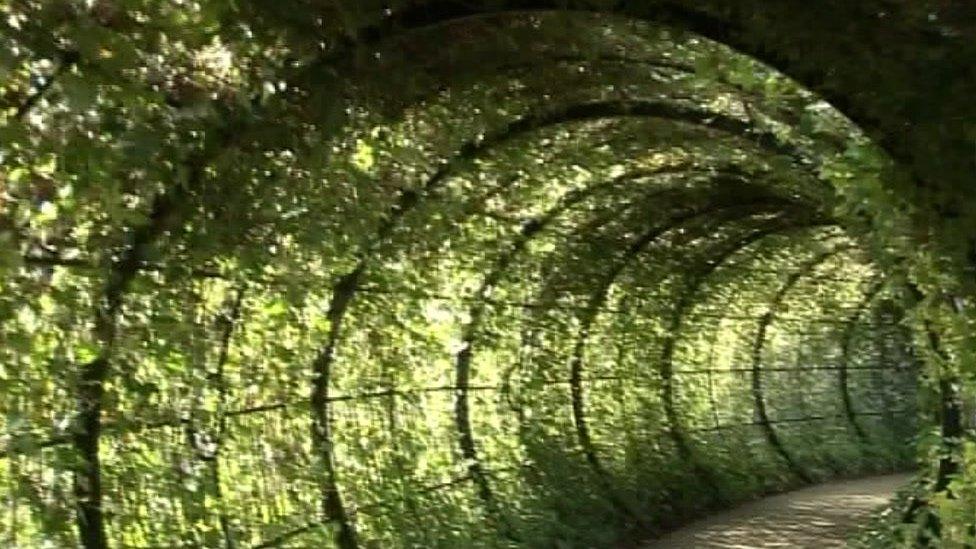 Tunnel in garden