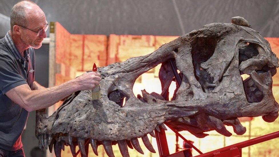 T.rex being assembled in Glasgow