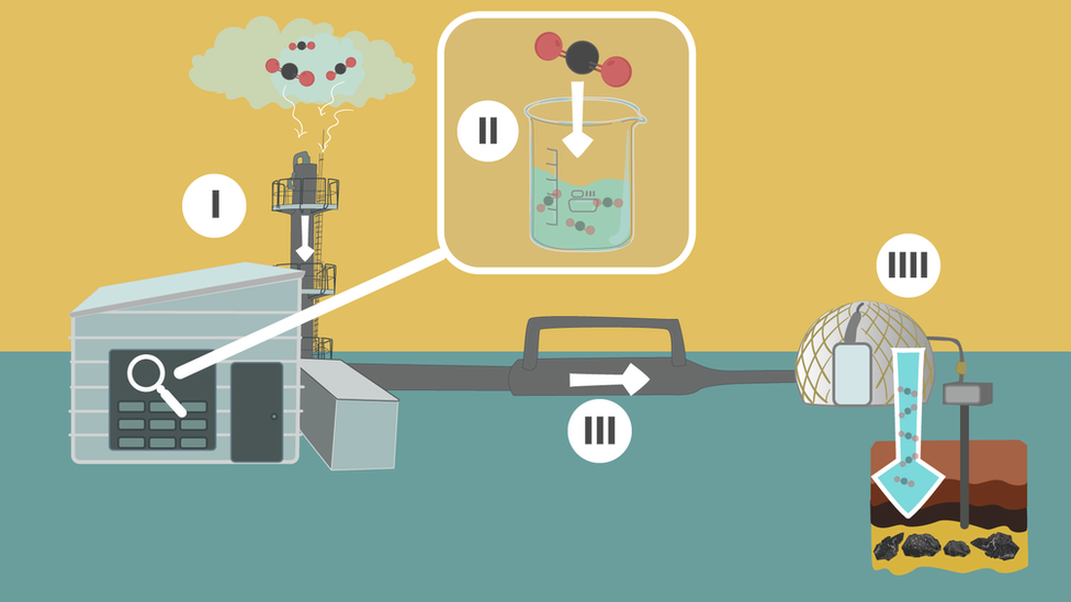 Proceso de mineralización, infografía